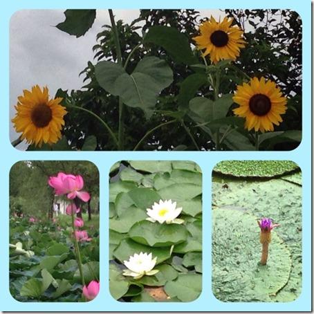 071815 お花