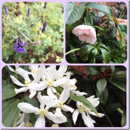 032816 My garden