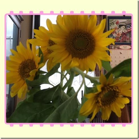 071716 sunflower2