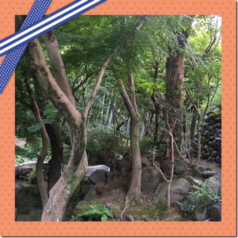 081016 Todoroki Valley3