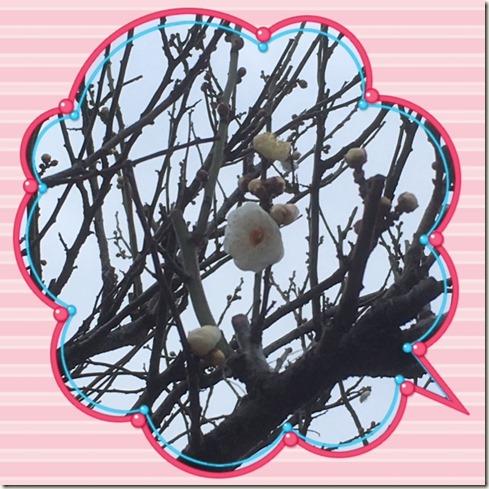 011417 UME TREE @ KAMEIDO