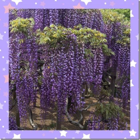 050317 wisteria trellis