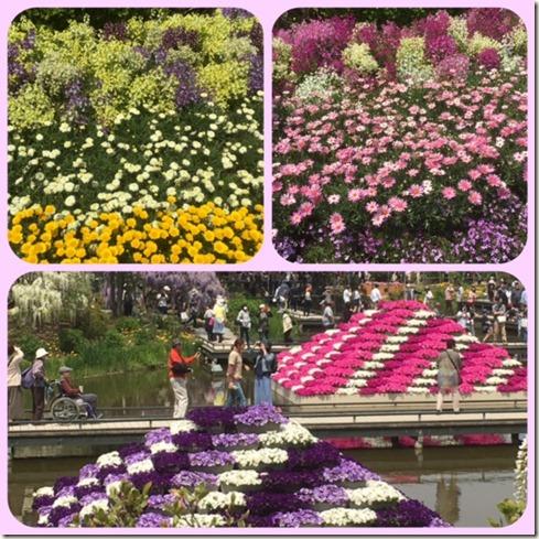 050317 ashikaga flower park