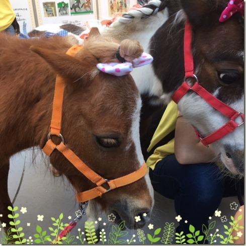 050517 pony