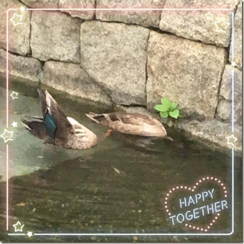 062717 duck