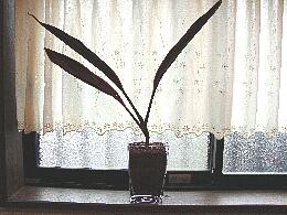 観葉植物062109.jpg